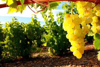 Rencontre viticole