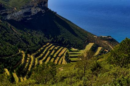 Les vignes escarpées de Provence