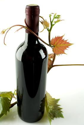 Bouteille de vin enlacée par une branche de vigne