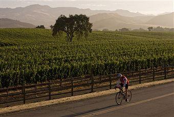 Faire du vélo à travers les vignes
